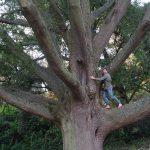 Tree Climbing - Sunny