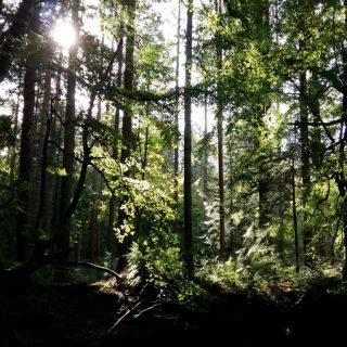 Forest Bathing – Creating connection and awareness