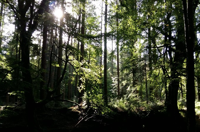 Shinrin-yoku - Forest bathing